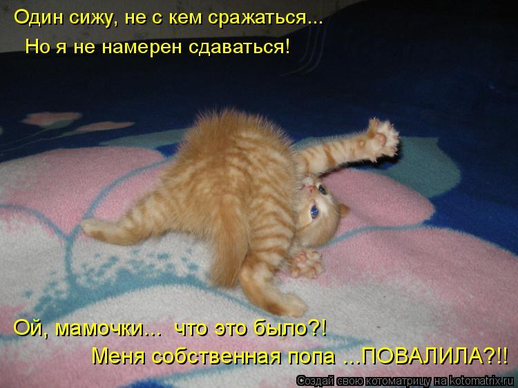 Котоматрица: Один сижу, не с кем сражаться...  Но я не намерен сдаваться! Ой, мамочки...  что это было?! Меня собственная попа ...ПОВАЛИЛА?!!