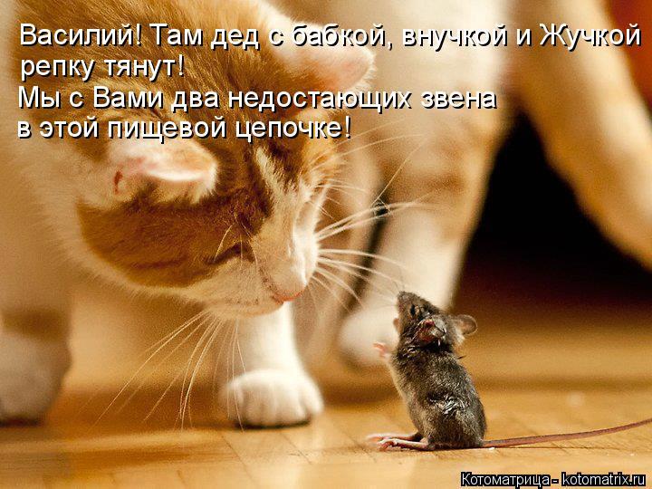 Котоматрица: Василий! Там дед с бабкой, внучкой и Жучкой репку тянут! Мы с Вами два недостающих звена в этой пищевой цепочке!