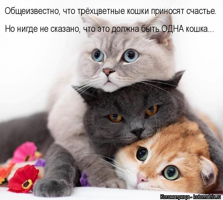 Котоматрица: Общеизвестно, что трёхцветные кошки приносят счастье. Но нигде не сказано, что это должна быть ОДНА кошка...