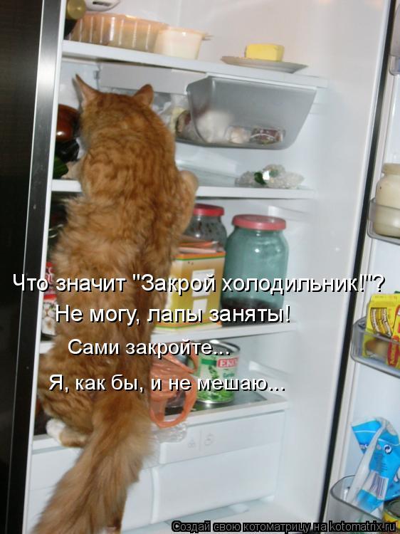 """Котоматрица: Сами закройте... Я, как бы, и не мешаю... Что значит """"Закрой холодильник!""""? Не могу, лапы заняты!"""