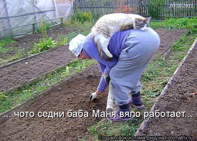Котоматрица: ... чото седни баба Маня вяло работает...