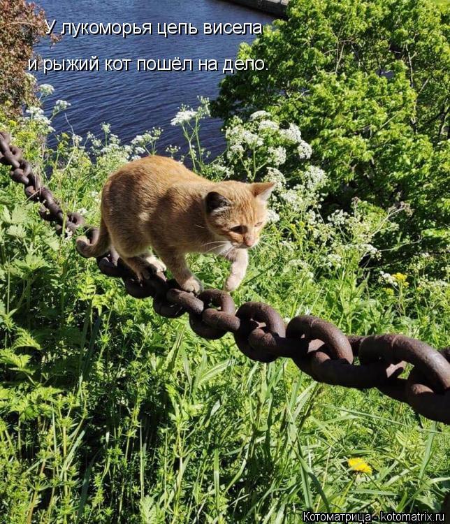 Котоматрица: У лукоморья цепь висела  и рыжий кот пошёл на дело.