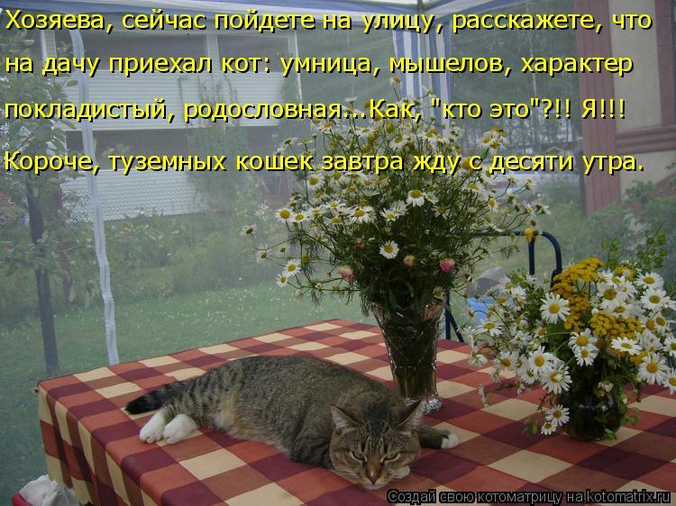 """Котоматрица: Хозяева, сейчас пойдете на улицу, расскажете, что  на дачу приехал кот: умница, мышелов, характер покладистый, родословная...Как, """"кто это""""?!! Я!!"""