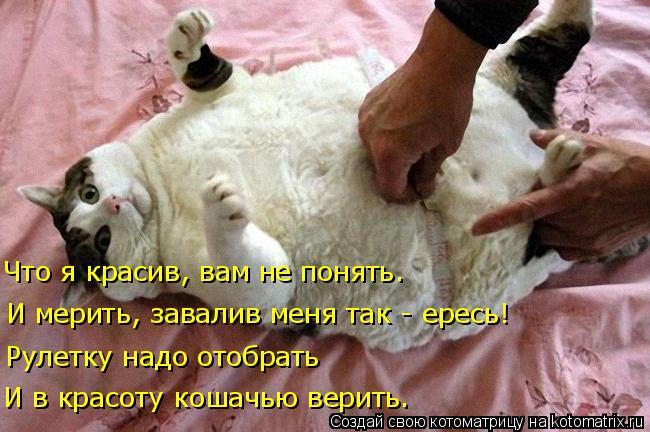 Котоматрица: Что я красив, вам не понять. И мерить, завалив меня так - ересь! Рулетку надо отобрать И в красоту кошачью верить.