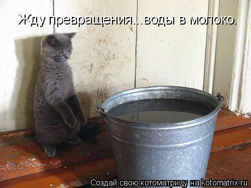 Котоматрица: Жду превращения...воды в молоко.
