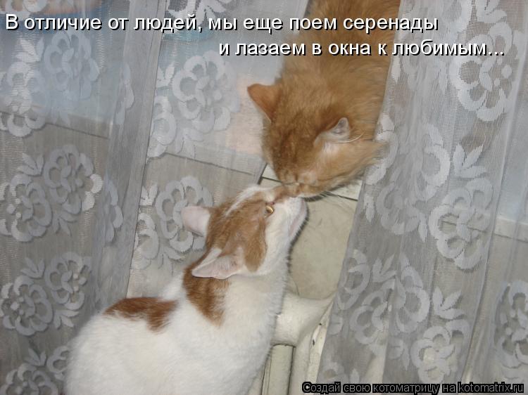 Котоматрица: В отличие от людей, мы еще поем серенады  и лазаем в окна к любимым...