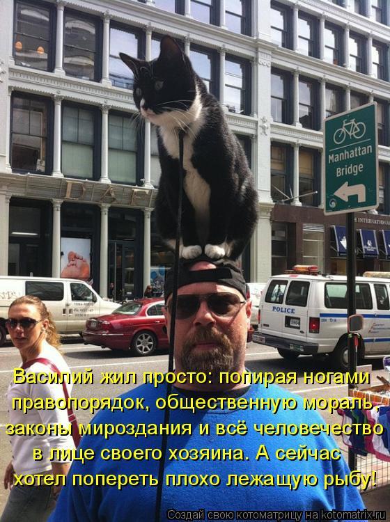 Котоматрица: Василий жил просто: попирая ногами правопорядок, общественную мораль, законы мироздания и всё человечество в лице своего хозяина. А сейчас