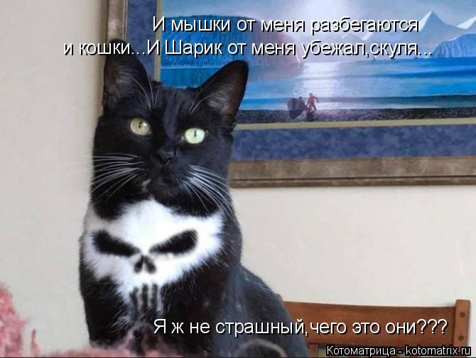 Котоматрица: И мышки от меня разбегаются и кошки...И Шарик от меня убежал,скуля... Я ж не страшный,чего это они???