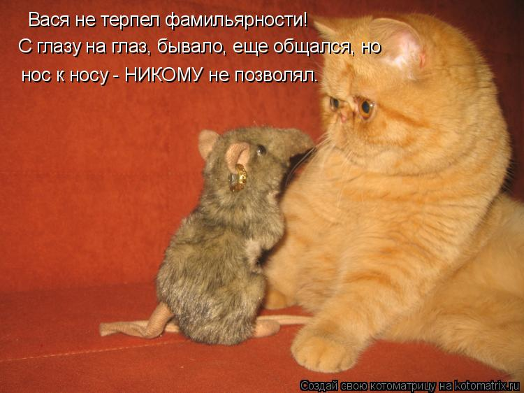 Котоматрица: С глазу на глаз, бывало, еще общался, но Вася не терпел фамильярности! нос к носу - НИКОМУ не позволял.