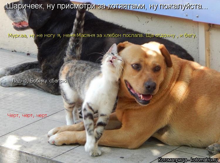 Котоматрица: Шаричеек, ну присмотри за котяятами, ну пожалуйста... Муркаа, ну не могу я, меня Масяня за хлебом послала. Ща отдохну , и бегу. Ладно, Бобику сба