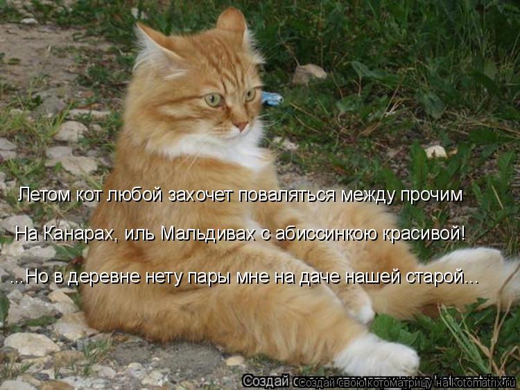 Котоматрица: Летом кот любой захочет поваляться между прочим На Канарах, иль Мальдивах с абиссинкою красивой! ...Но в деревне нету пары мне на даче нашей ?