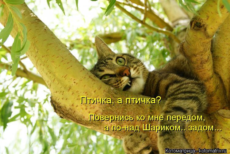Котоматрица: Повернись ко мне передом, а по-над Шариком.. задом... Птичка, а птичка?