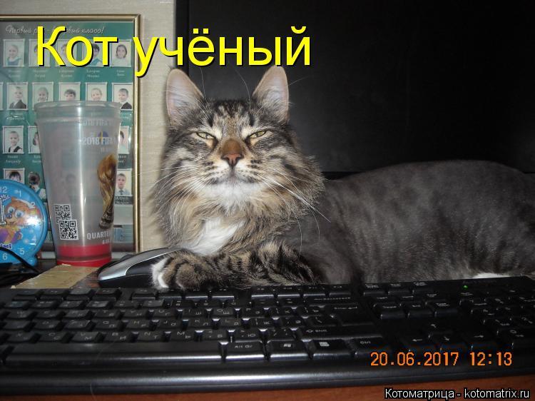 Котоматрица: Кот учёный