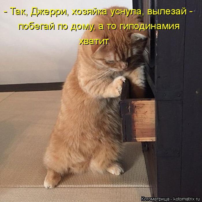 Котоматрица: - Так, Джерри, хозяйка уснула, вылезай - побегай по дому, а то гиподинамия хватит