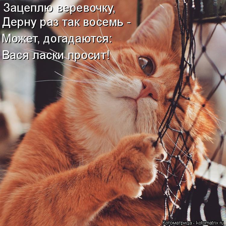 Котоматрица: Зацеплю веревочку, Дерну раз так восемь - Может, догадаются: Вася ласки просит!