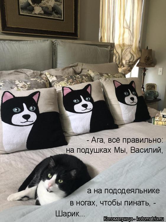 Котоматрица: - Ага, всё правильно: на подушках Мы, Василий, а на пододеяльнике в ногах, чтобы пинать, - Шарик...