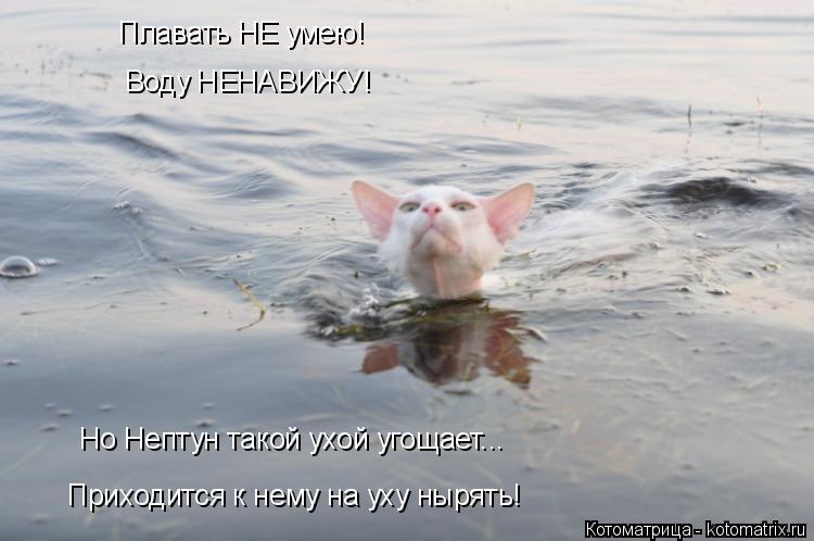 Котоматрица: Плавать НЕ умею! Воду НЕНАВИЖУ! Но Нептун такой ухой угощает... Приходится к нему на уху нырять!