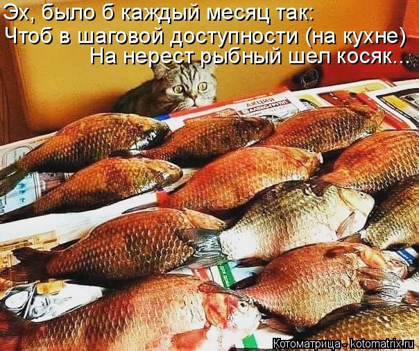 Котоматрица: Эх, было б каждый месяц так:  Чтоб в шаговой доступности (на кухне) На нерест рыбный шел косяк...