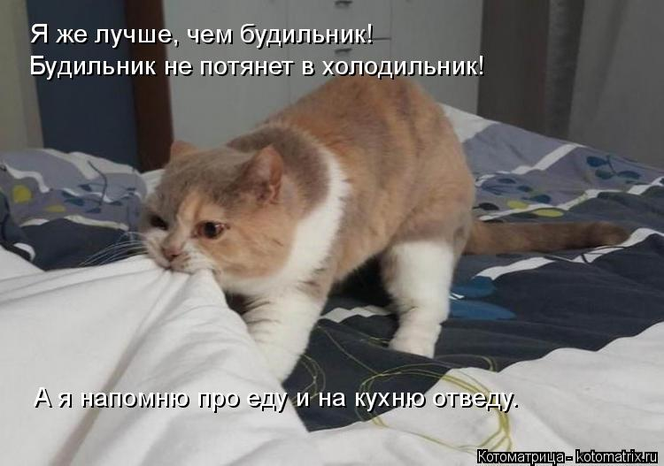 Котоматрица: Я же лучше, чем будильник! Будильник не потянет в холодильник! А я напомню про еду и на кухню отведу.