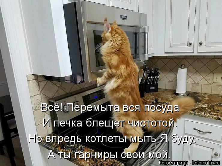 Котоматрица: Всё! Перемыта вся посуда И печка блещет чистотой. Но впредь котлеты мыть Я буду. А ты гарниры свои мой.