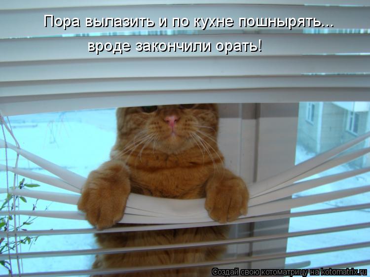 Котоматрица: Пора вылазить и по кухне пошнырять... вроде закончили орать!