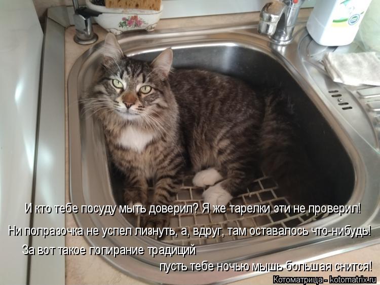 Котоматрица: И кто тебе посуду мыть доверил? Я же тарелки эти не проверил! Ни полразочка не успел лизнуть, а, вдруг, там оставалось что-нибудь! За вот такое