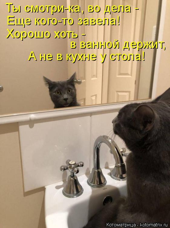 Котоматрица: Ты смотри-ка, во дела - Еще кого-то завела! Хорошо хоть -  в ванной держит, А не в кухне у стола!