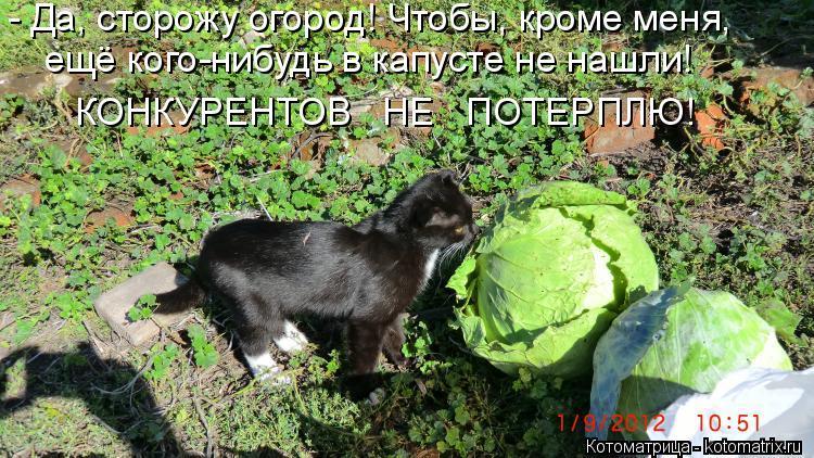 Котоматрица: - Да, сторожу огород! Чтобы, кроме меня, ещё кого-нибудь в капусте не нашли! КОНКУРЕНТОВ   НЕ   ПОТЕРПЛЮ!