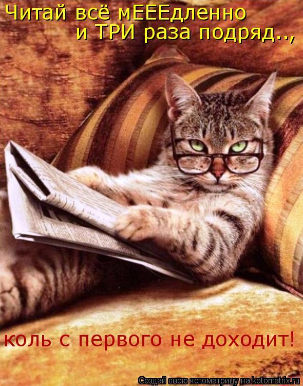 Котоматрица: Читай всё мЕЕЕдленно   и ТРИ раза подряд.., коль с первого не доходит!