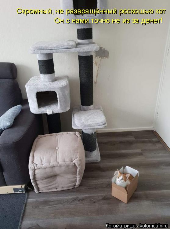 Котоматрица: Скромный, не развращённый роскошью кот Он с нами точно не из за денег!