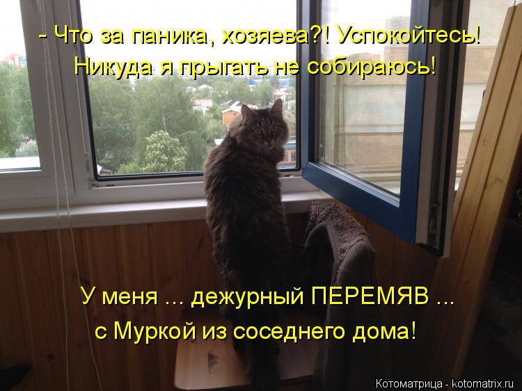 Котоматрица: - Что за паника, хозяева?! Успокойтесь! Никуда я прыгать не собираюсь! У меня ... дежурный ПЕРЕМЯВ ... с Муркой из соседнего дома!