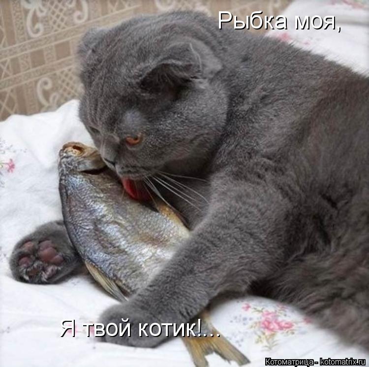 Котоматрица: Рыбка моя,  Я твой котик!...