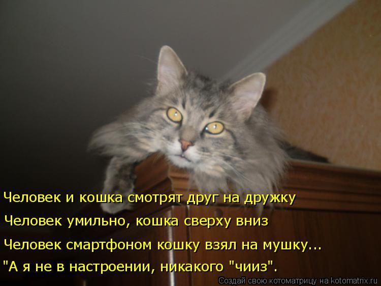 """Котоматрица: """"А я не в настроении, никакого """"чииз"""". Человек смартфоном кошку взял на мушку... Человек умильно, кошка сверху вниз Человек и кошка смотрят дру"""