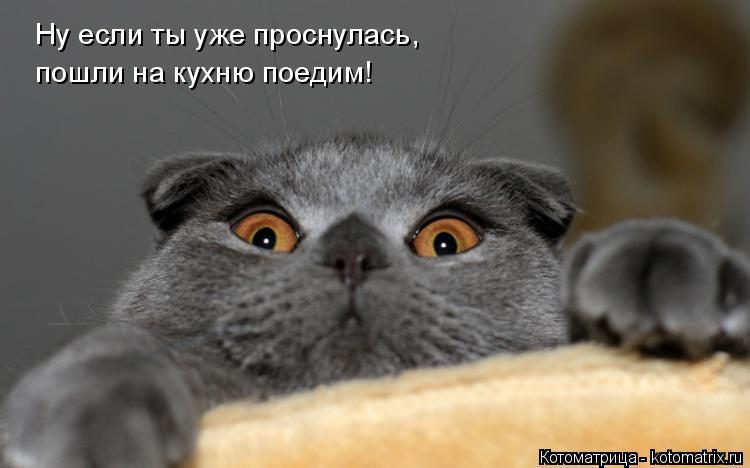 Котоматрица: Ну если ты уже проснулась,  пошли на кухню поедим!