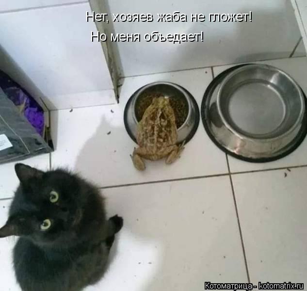Котоматрица: Нет, хозяев жаба не гложет! Но меня объедает!