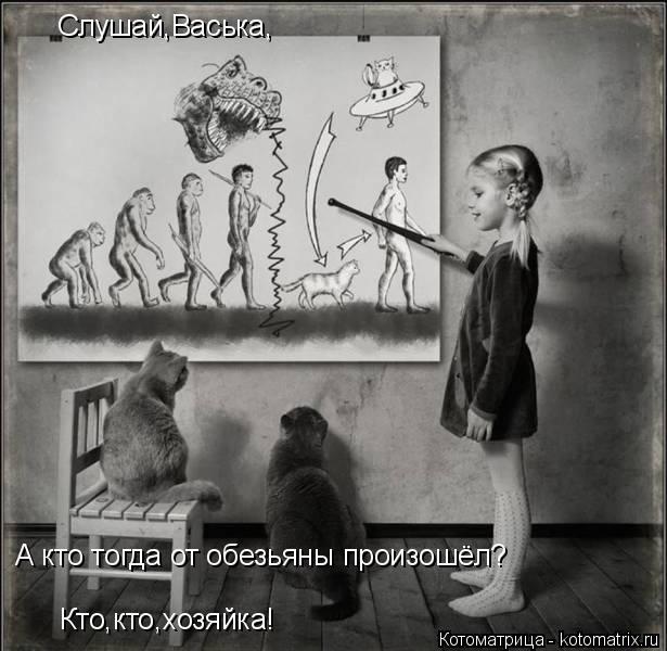 Котоматрица: Слушай,Васька, А кто тогда от обезьяны произошёл? Кто,кто,хозяйка!