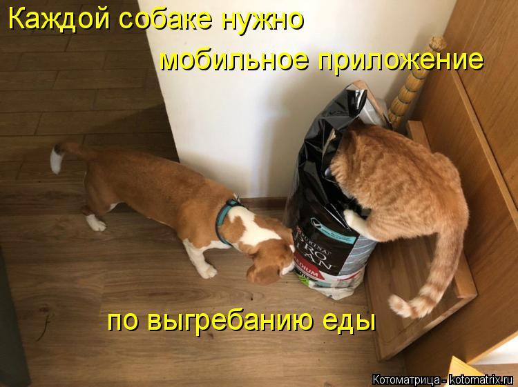 Котоматрица: Каждой собаке нужно мобильное приложение по выгребанию еды
