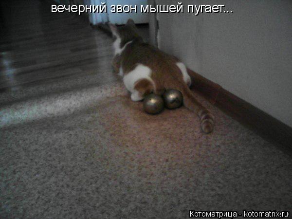Котоматрица: вечерний звон мышей пугает...