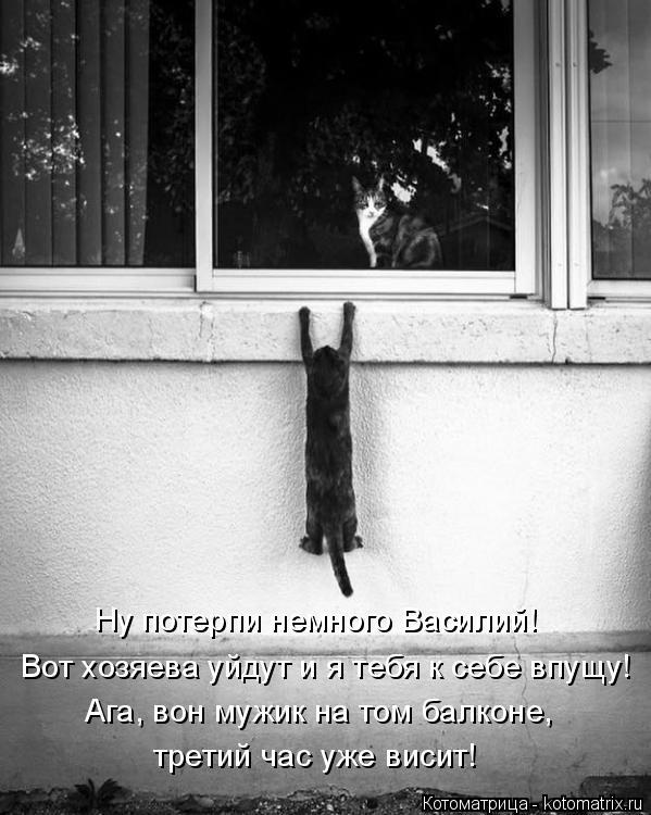 Котоматрица: Вот хозяева уйдут и я тебя к себе впущу! Ну потерпи немного Василий! Ага, вон мужик на том балконе, третий час уже висит!