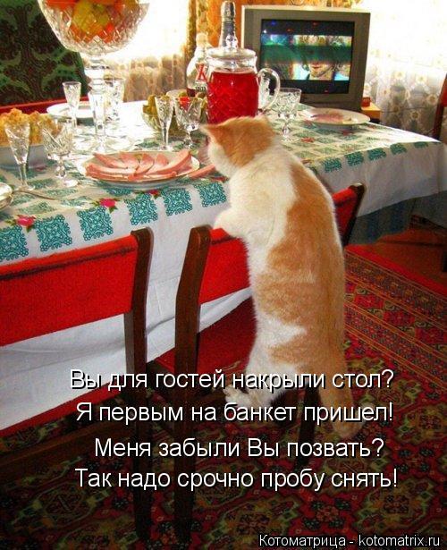 Котоматрица: Так надо срочно пробу снять! Вы для гостей накрыли стол? Я первым на банкет пришел! Меня забыли Вы позвать?
