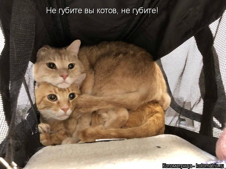 Котоматрица: Не губите вы котов, не губите!