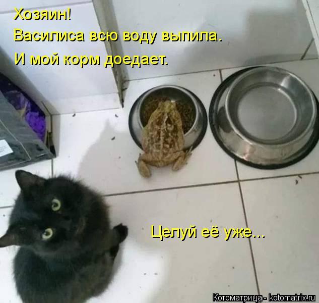 Котоматрица: Хозяин! Василиса всю воду выпила. И мой корм доедает. Целуй её уже...