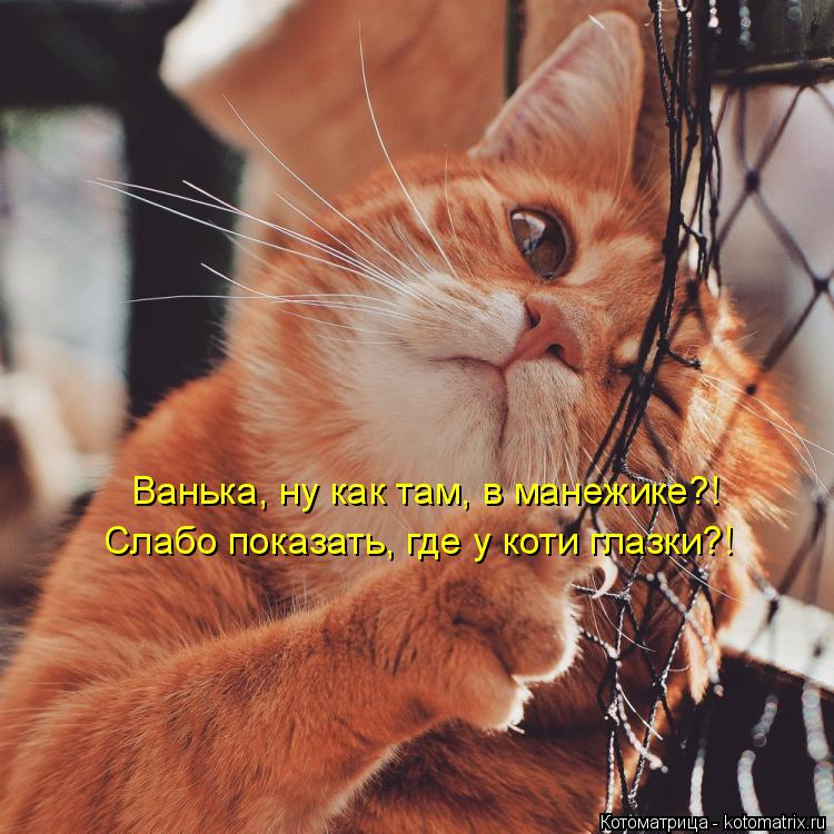 Котоматрица: Ванька, ну как там, в манежике?! Слабо показать, где у коти глазки?!