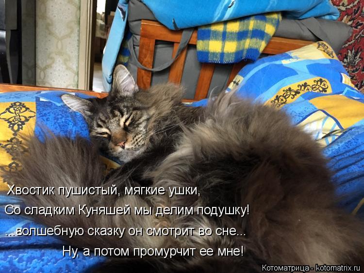 Котоматрица: Хвостик пушистый, мягкие ушки, Со сладким Куняшей мы делим подушку! ...волшебную сказку он смотрит во сне... Ну, а потом промурчит ее мне!