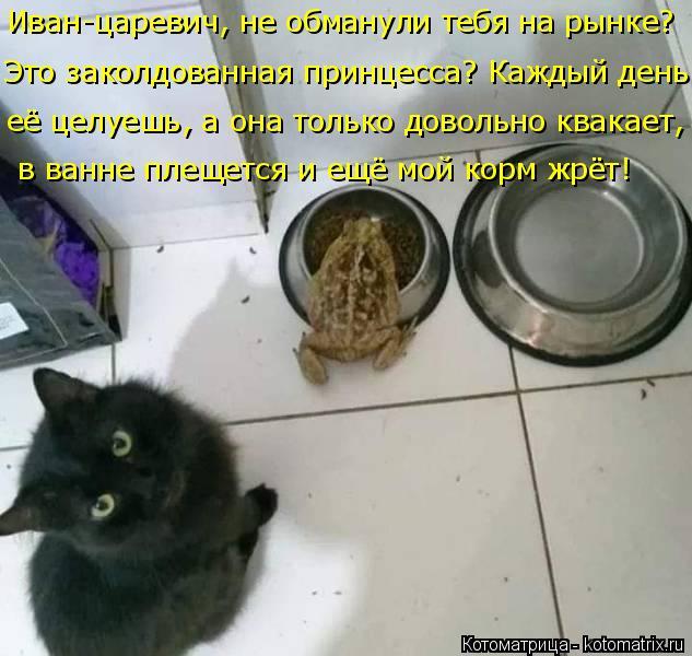 Котоматрица: Иван-царевич, не обманули тебя на рынке?   в ванне плещется и ещё мой корм жрёт! Это заколдованная принцесса? Каждый день её целуешь, а она тол