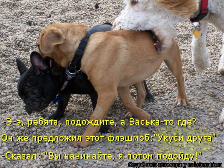 """Котоматрица: -Э-э, ребята, подождите, а Васька-то где?  Он же предложил этот флэшмоб:""""Укуси друга"""" -Сказал: """"Вы начинайте, я потом подойду!"""""""