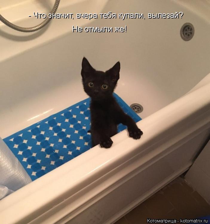 Котоматрица: - Что значит, вчера тебя купали, вылезай? Не отмыли же!
