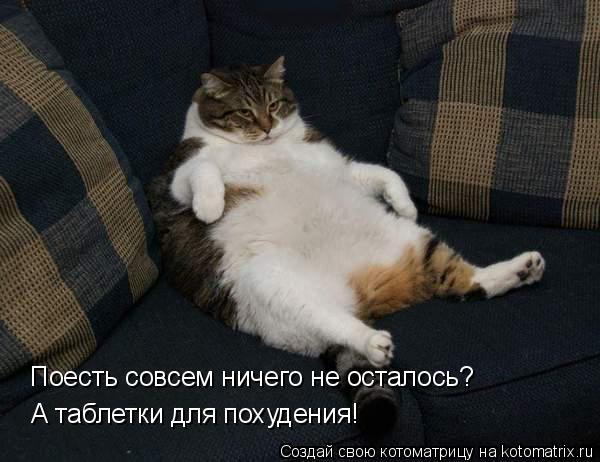 Котоматрица: Поесть совсем ничего не осталось? А таблетки для похудения!