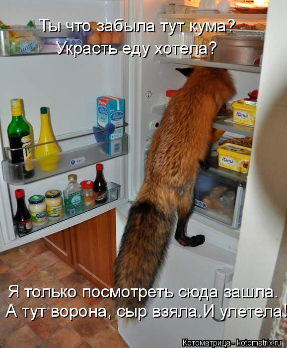 Котоматрица: Ты что забыла тут кума? Украсть еду хотела? Я только посмотреть сюда зашла.  А тут ворона, сыр взяла.И улетела!