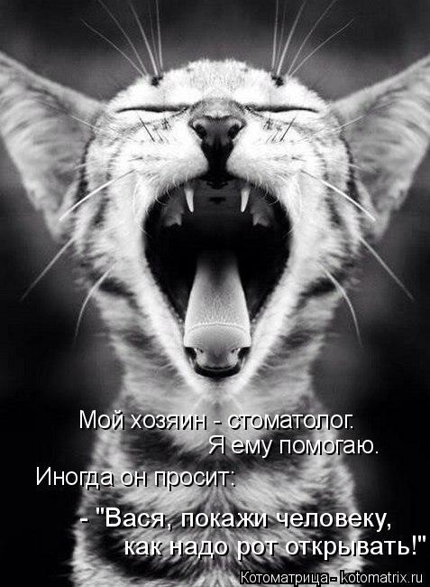 """Котоматрица: Мой хозяин - стоматолог. Я ему помогаю. Иногда он просит: - """"Вася, покажи человеку, как надо рот открывать!"""""""